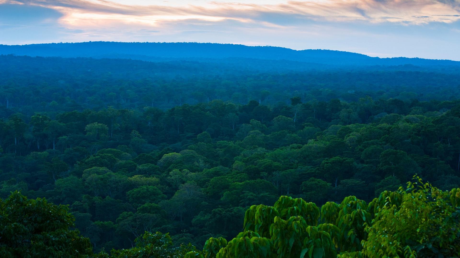 Foret tropicale province equateur republique democratique du congo
